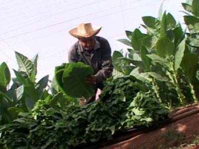 20120109161808-tabaco-2.jpg