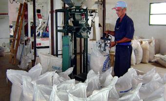 Procesan industrialmente en Camagüey arroz de la actual cosecha
