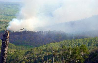 20120305173946-incendios-01.jpg