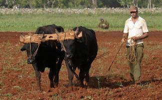 20120511175915-campesino-tierras.jpg