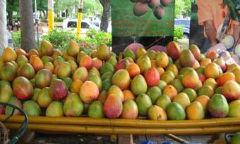 20120609151620-mango-iv.jpg