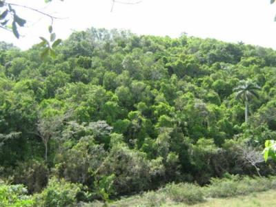 20120621161128-bosque.jpg