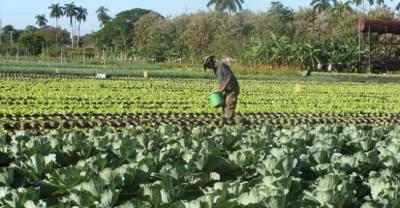 20120718175533-agricultura.jpg