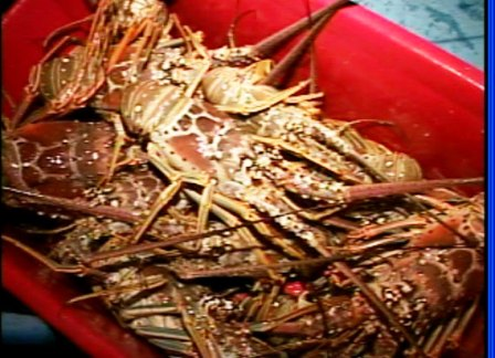20110215182720-pesca.jpg