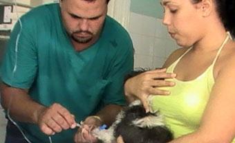 20111028231006-veterinaria-cuba-phot.jpg