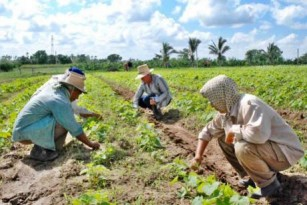 20120120035103-mujer-campesina-cubana-546231-thumb307-.jpg
