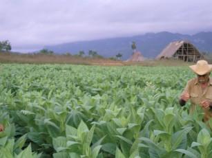 20120228230501-tabaco-5656-thumb307-.jpg