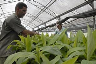 20120328184454-plantas12-thumb307-.jpg