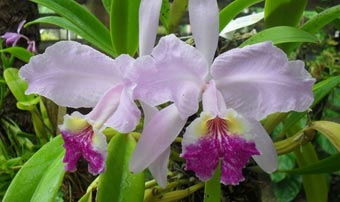 20120410165254-orquideas-de-soroa-cuba.jpg