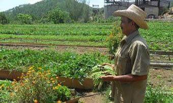 20120509220532-agricultura-urbana-lasminas.jpg