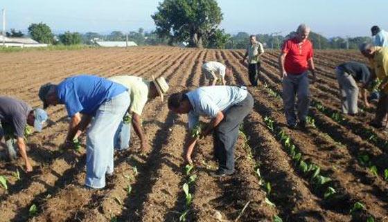20121012055602-tabacaleros-canteros-tecnificados2.jpg