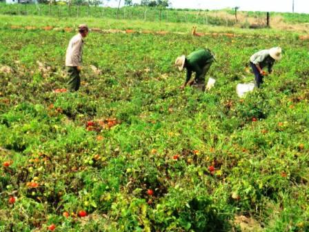 20130327172656-tomate.jpg