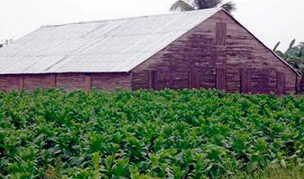 20160610043834-casa-tabaco-pinar-aguas-fpt1.jpg